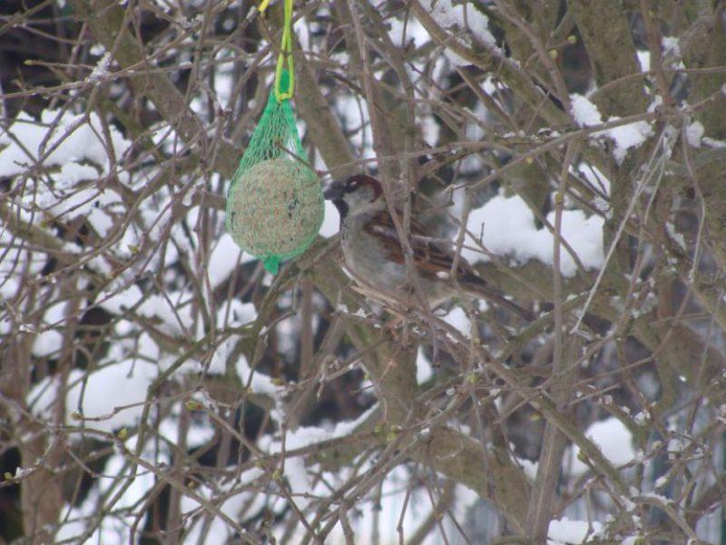 Pomagamy ptakom przetrwać zimę